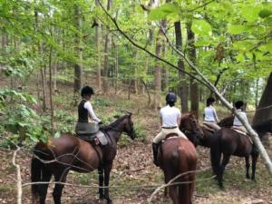 Linden riders stand in place in the woods.